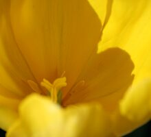 Yellow Peek by TraceyLea