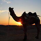 A camel. by debjyotinayak