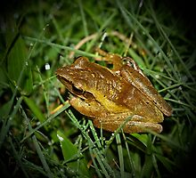 Rice Paddy Frog 3 by Normf