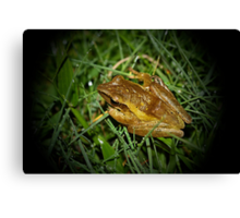 Rice Paddy Frog 3 Canvas Print