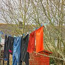 Wash day by Ann Persse