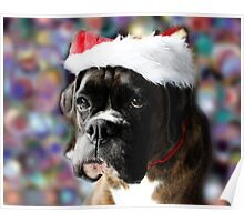 The Colour Of Christmas - Boxer Dogs Series Poster