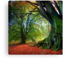 Autumn Beech Canvas Print