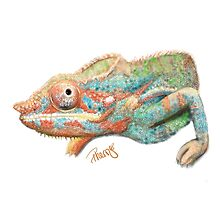 Panther Chameleon Ensho by pnwthings