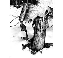Shedding a Winter Coat Photographic Print