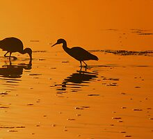 silhouette's of the morning by kathy s gillentine