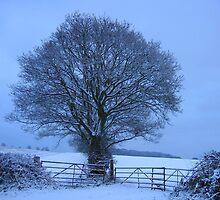 A lone tree in Winter by hjaynefoster