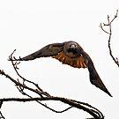 Guarding the Nest by David Friederich