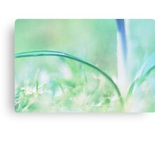 crocus I Canvas Print