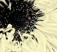 Sunflower by Maggie Mearns