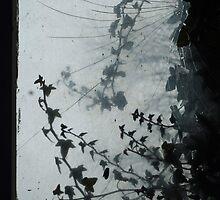 Knocking on your window... by Bojoura Stolz