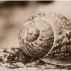The Sepia Sleepy Snail by Laura Davey