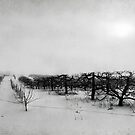 Orchard in Winter by Steve Leath