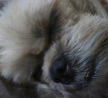Sleeping Beauty by vigor