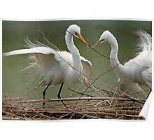Avery Island Egrets--Teamwork Poster