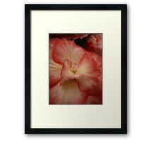 Begonia - 11 Framed Print