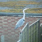 Heron by amy4vince