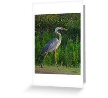 Walking Heron - Birds in Florida Greeting Card