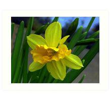 Fresh New Yellow Narcissus Art Print
