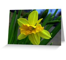 Fresh New Yellow Narcissus Greeting Card