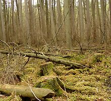 Mossy Forest - Lebanon State Forest by Christina Spiegeland