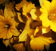 Splash of Yellow by MichelleRees