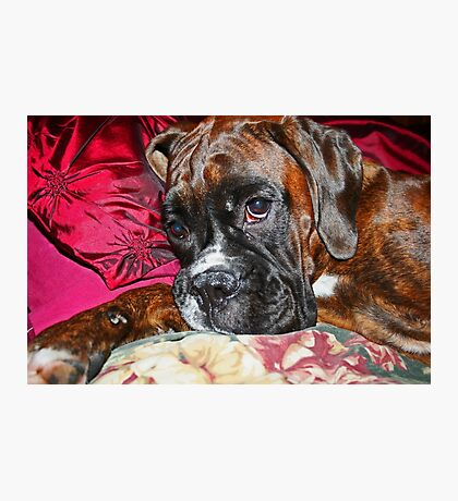 Dreamy -Boxer Dogs Series- Photographic Print