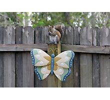 The Squirrel and Butterfly Photographic Print