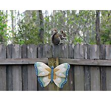 Sitting on the Fence Photographic Print