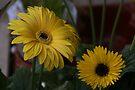 Spring Flowers - Blackheath Shop by Allen Lucas
