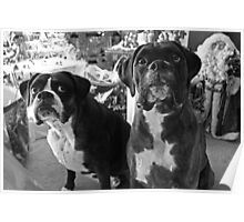 "Did Someone Said ""Presents"" ?  -Boxer Dogs Series- Poster"