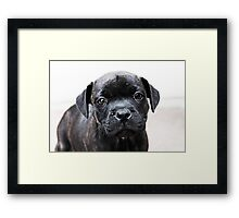 Milly Framed Print