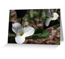 Springtime White Trilliums Greeting Card