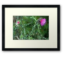 """The Common but Beautiful """"Musk Thistle""""  Framed Print"""