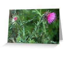 "The Common but Beautiful ""Musk Thistle""  Greeting Card"