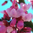 Tree Blooms in Pink by Sandra Moore