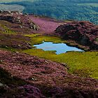 Cloud in lake with heather, Wales by rolpa
