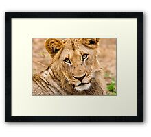 Look Into My Eyes! Framed Print