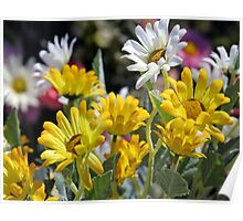 *SPRING DAISIES* Poster