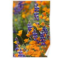 Lupines and Poppies Poster
