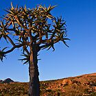 The Quiver Tree (Kokerboom) by Fineli