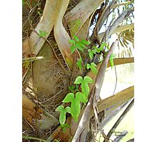 Vine on Palm Trunk 2 Photographic Print
