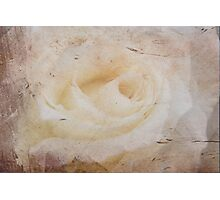 Grunge Rose Photographic Print