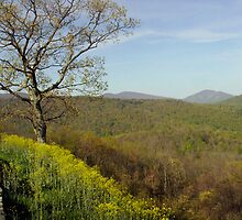 Yellow Tree Mountains - Trees in Virginia by Christina Spiegeland