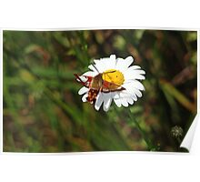 Sipping Nectar Poster