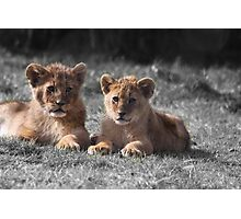 Baby Lion Cubs Photographic Print