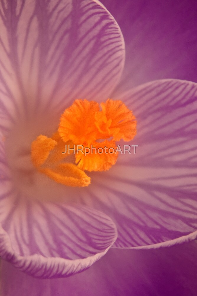 Deep Down ( Crocus) by JHRphotoART