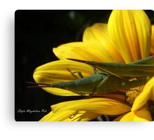 just nature... Canvas Print
