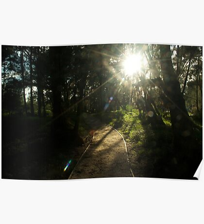 sunny footpath Poster