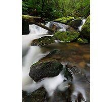Fresh Gippsland Greens Photographic Print
